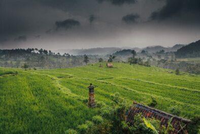 Rainy days rice field view in Sidemen