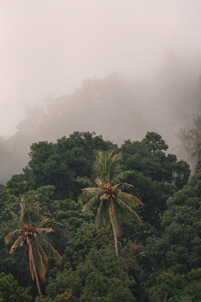 Fog lingering in the canopy of the dense jungle in Sidemen