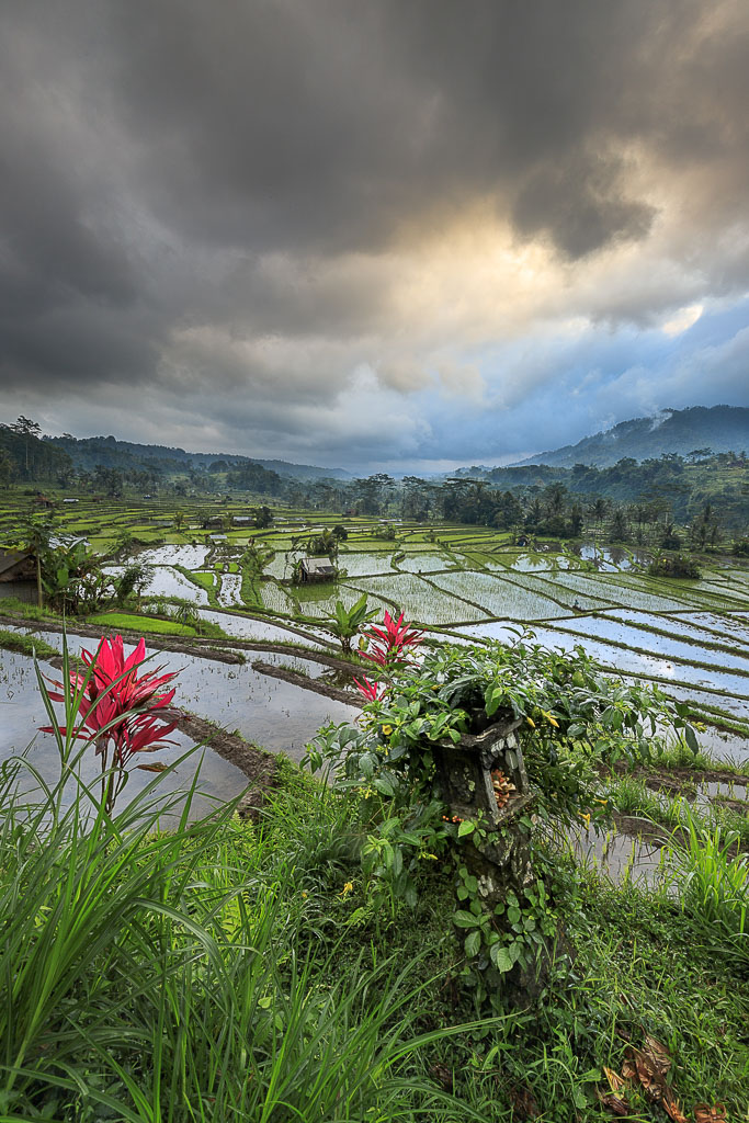 Views over the rice fields on a cloudy day in Sidemen