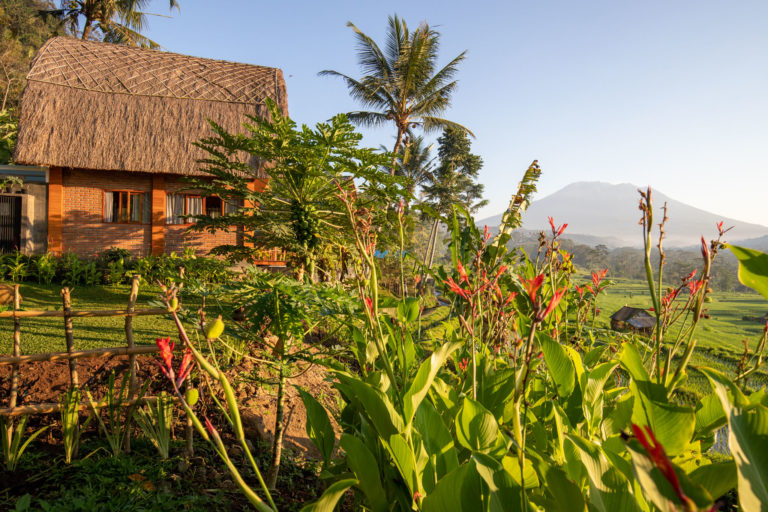 Villa Umah Dewi Sri - Bali - Sidemen - Umah Sri-48