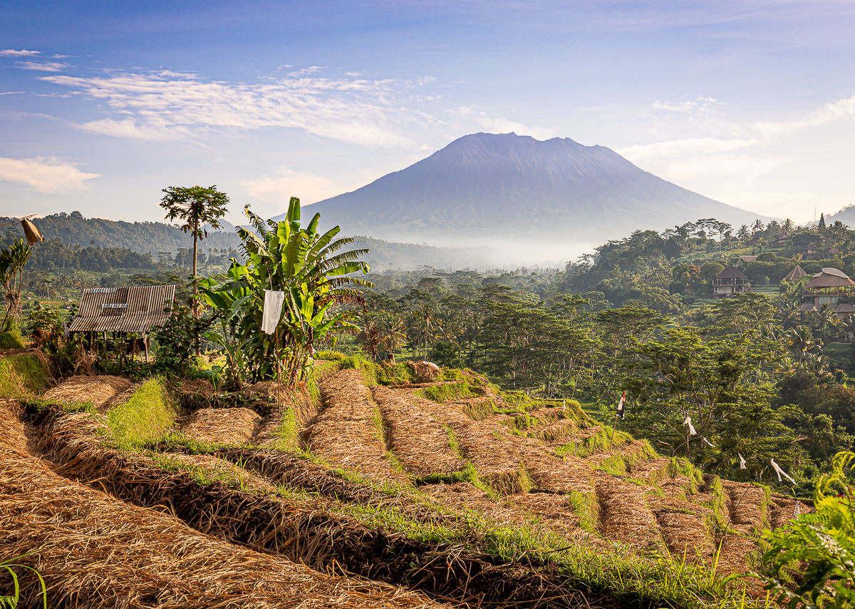 Rice fields in Sidemen with Mt. Agung in the background - Villa Uma Dewi Sri - Places to stay in Sidemen - Bali - Indonesia